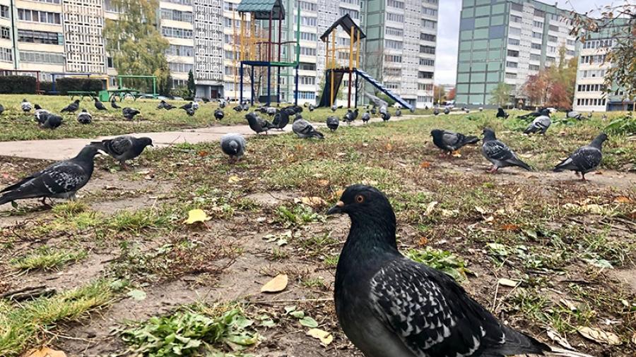 Создание дворовой комфортной среды в Обнинске фактически под угрозой: доля вклада жителей выросла в 20 раз