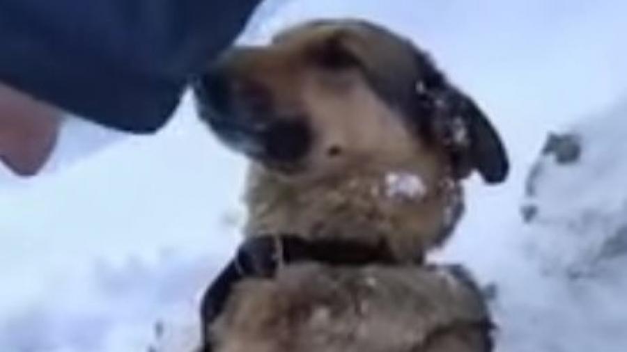 В Калуге неравнодушные люди спасли собаку, которая буквально вмерзла в лед