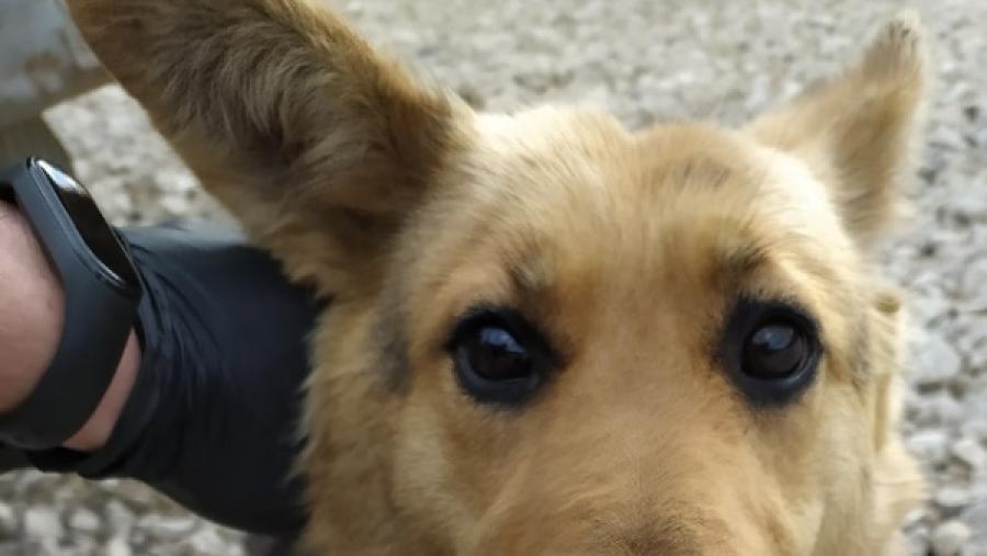 В Жукове отлавливают собак