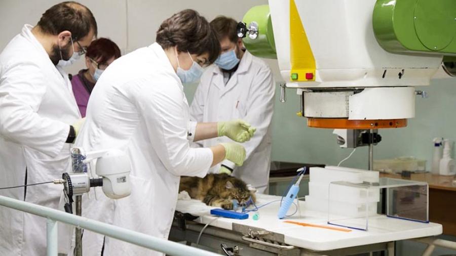 В клинике ветеринарной онкологии МРНЦ в Обнинске животных лечат, как нигде в России