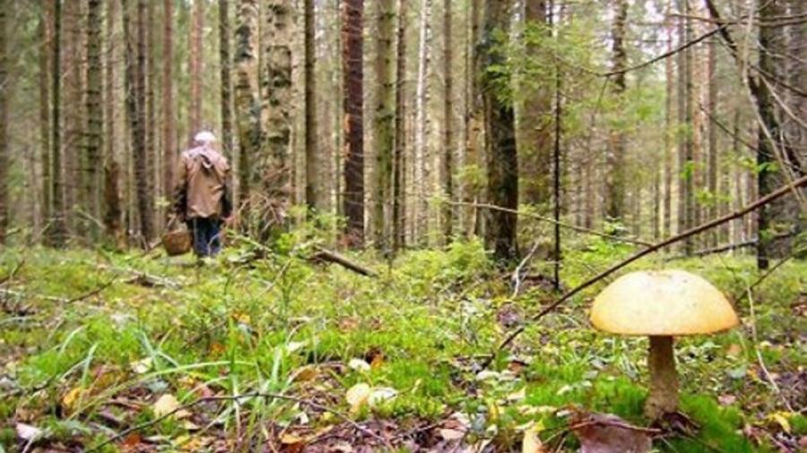 """В июле добровольцы """"ЛизаАлерт"""" Калужской области нашли больше 100 пропавших людей"""