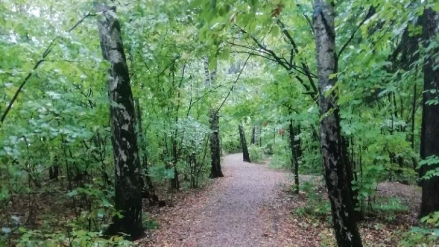 Мэрия собирается контролировать Гурьяновский лес