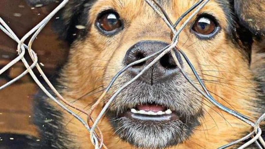 В Калуге удалось решить вопрос с выселением собачьих приютов