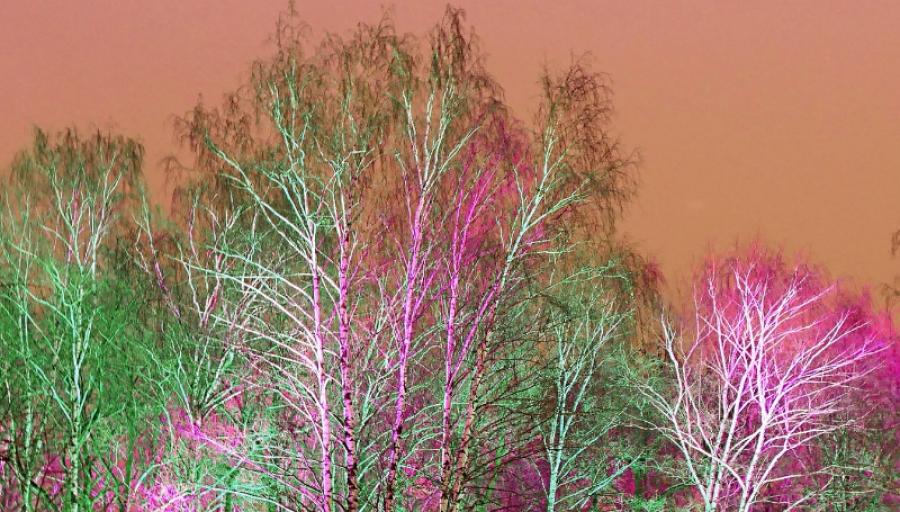 Планы по подсветке Гурьяновского леса отнесли на следющий год