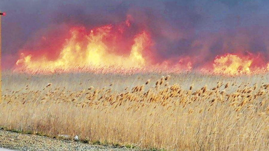 Спасатели бьют тревогу из-за пала травы