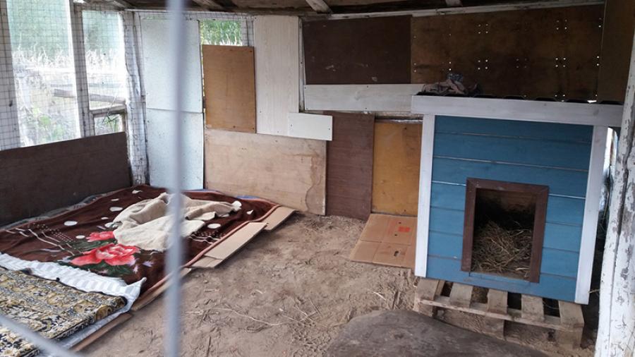 Жители Жукова нашли решение, казалось бы, неразрешимой проблемы бездомных животных