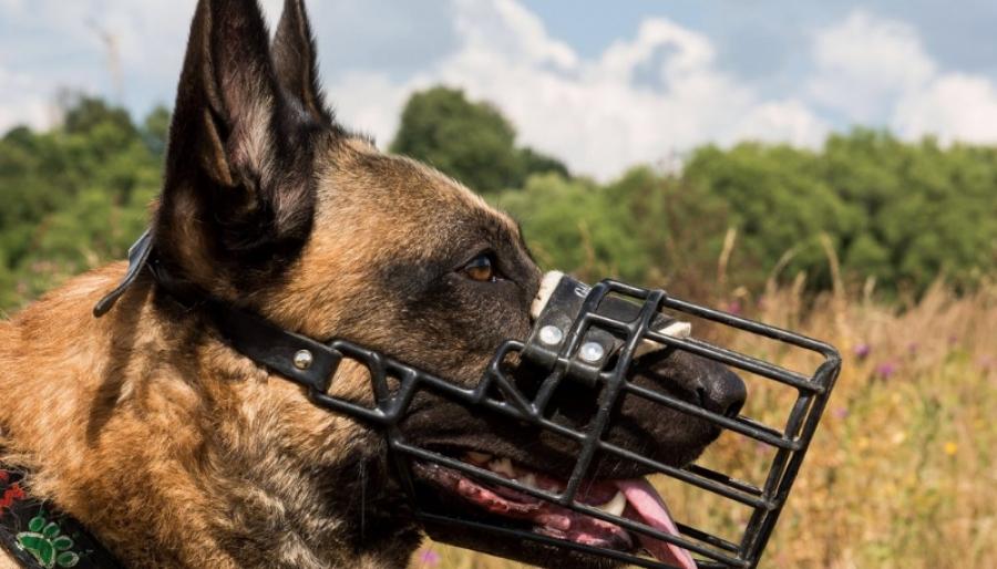 Собакам разрешат ходить без намордников
