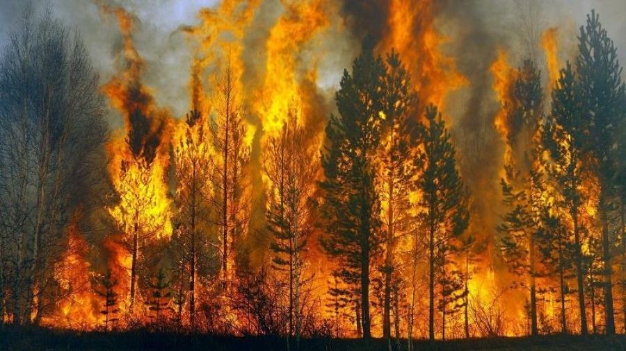 За неделю в Калужской области выгорело больше 14 га леса