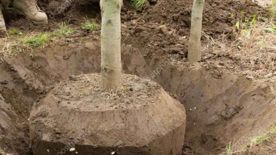Жители Боровского района жалуются на похитителей деревьев