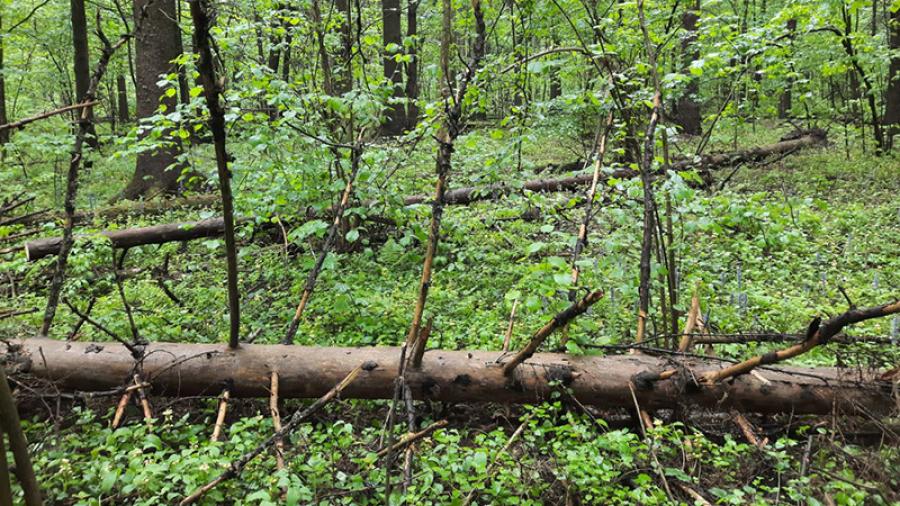 В Обнинске готовятся расчищать лес на территории «Нижнего парка» и Дачи «Бугры»