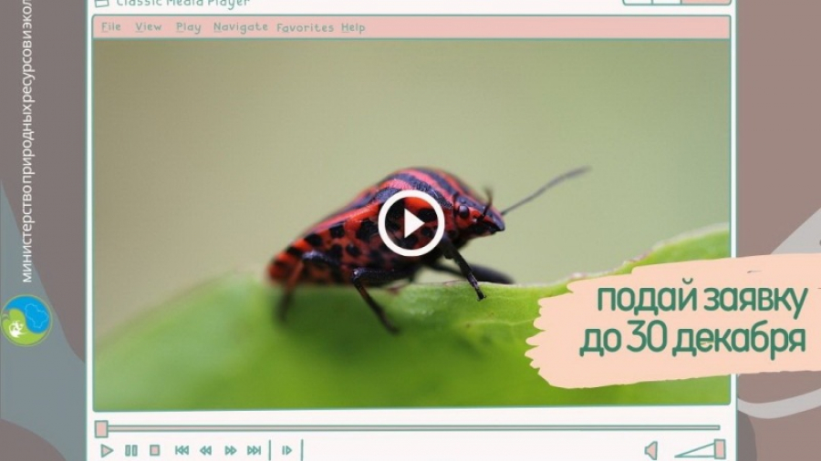 Жителей Калужской области зовут сделать ролики для «Минуты экологии»