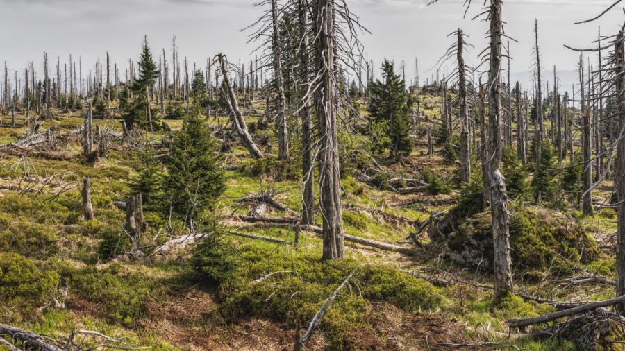 Из Калужской области вывозят карантинный лес, не оформляя сертификатов